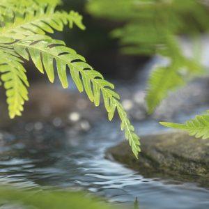 φωτοταπετσαρια τοιχου φυλλα στο ποταμι 1-611