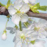 φωτοταπετσαρια τοιχου λουλουδια 2-033