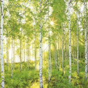 φωτοταπετσαρια τοιχου δασος 8-519