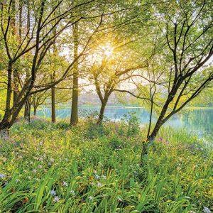 φωτοταπετσαρια τοιχου δασος και λιμνη 8-524