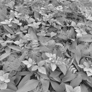 φωτοταπετσαρια τοιχου λουλουδια 8-914