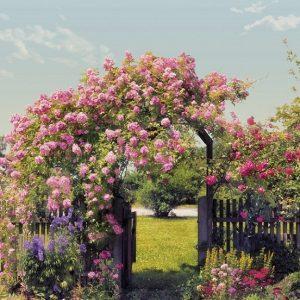 φωτοταπετσαρια τοιχου κηπος με τριανταφυλλα 8-936