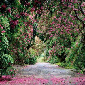 φωτοταπετσαρια τοιχου δασος 8-985