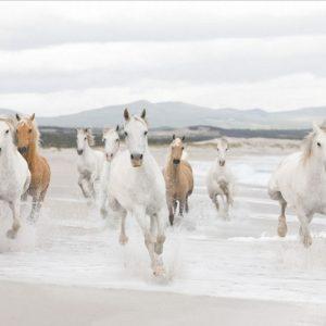 φωτοταπετσαρια τοιχου αλογα 8-986