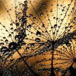Φωτοταπετσαρια πικραλιδες 1008