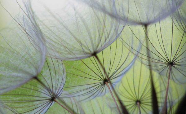 Φωτοταπετσαρια πικραλιδες 271