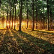 φωτοταπετσαρια τοιχου δασος 2226