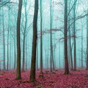 φωτοταπετσαρια τοιχου δασος 2657