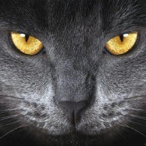 φωτοταπετσαρια τοιχου γατα 1-0500