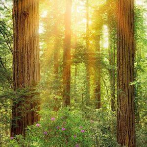 φωτοταπετσαρια τοιχου δασος 2-044