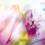 φωτοταπετσαρια τοιχου λουλουδια 4-0125