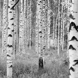 φωτοταπετσαρια τοιχου δασος 4-023
