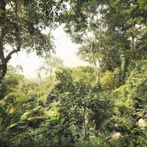 φωτοταπετσαρια τοιχου δασος 4-024