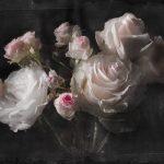 φωτοταπετσαρια τοιχου τριανταφυλλα 4-876