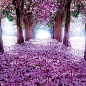 φωτοταπετσαρια τοιχου δασος 2379