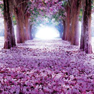 φωτοταπετσαρια τοιχου δασος 2379A