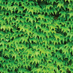 φωτοταπετσαρια τοιχου φυλλα 279