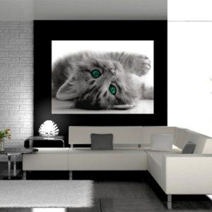 φωτοταπετσαρια τοιχου γατα 1-2605