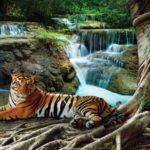 φωτοταπετσαρια τοιχου τιγρης 1-2652
