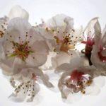 φωτοταπετσαρια τοιχου λουλουδια 4-0385