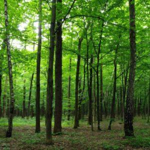 φωτοταπετσαρια τοιχου δασος 4-1324