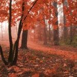 φωτοταπετσαρια τοιχου δασος MS0095