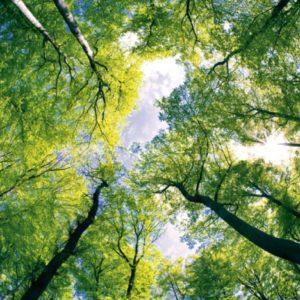 φωτοταπετσαρια τοιχου δασος MS0104