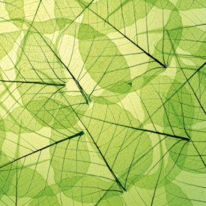 φωτοταπετσαρια τοιχου φυλλα MS0111